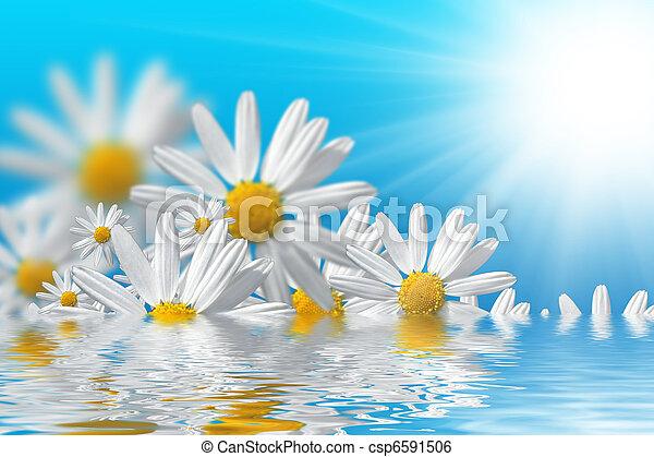 fleurs ressort, fond - csp6591506