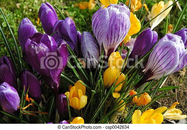 fleurs ressort - csp0042634