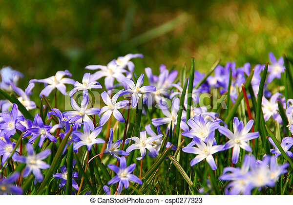 fleurs ressort - csp0277323