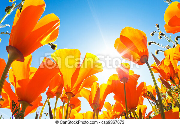 fleurs ressort - csp9367673