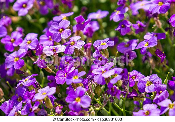 fleurs ressort, premier - csp36381660