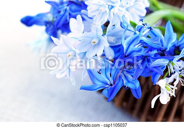 fleurs ressort, premier - csp1105037