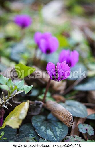 fleurs ressort, premier - csp25240118
