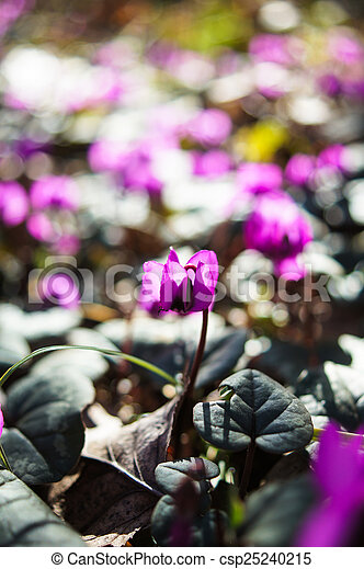 fleurs ressort, premier - csp25240215