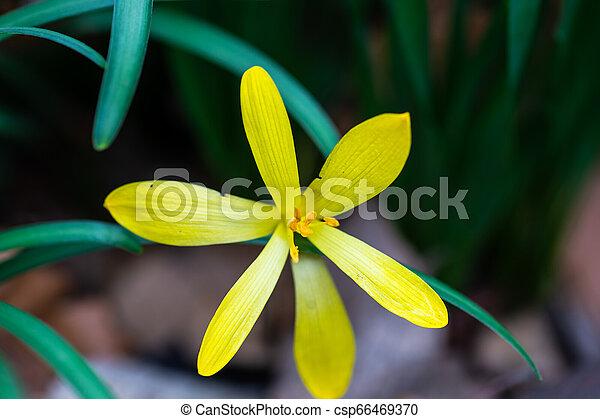 fleurs ressort, premier - csp66469370