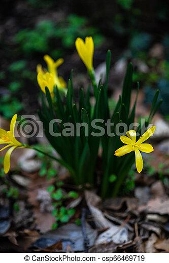fleurs ressort, premier - csp66469719