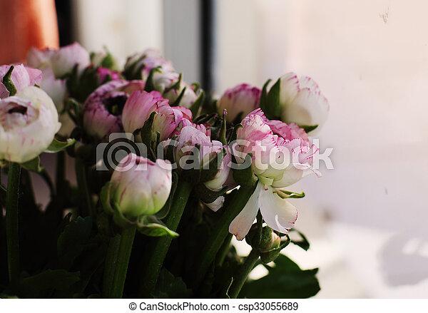 fleurs ressort, premier - csp33055689
