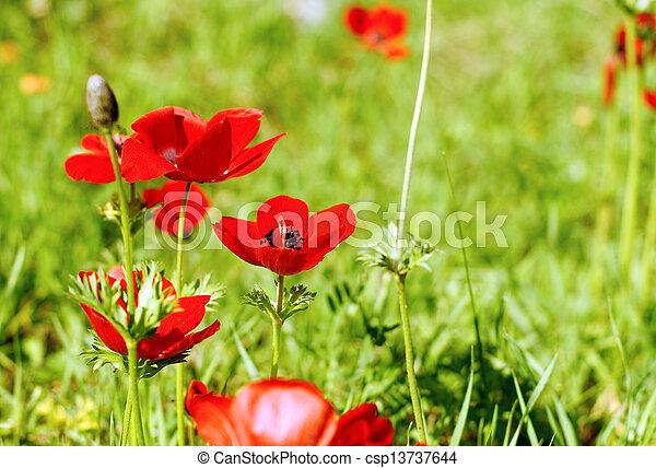 fleurs ressort, premier - csp13737644