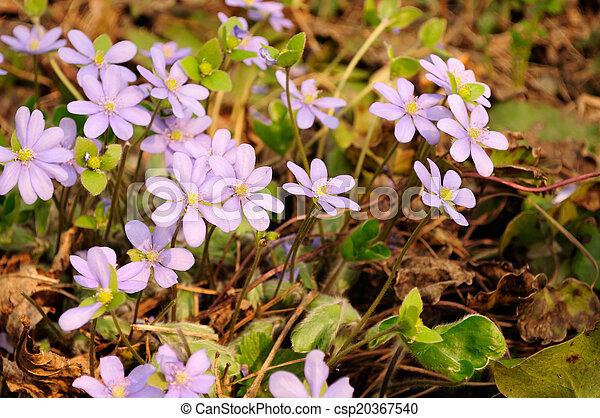 fleurs ressort, premier - csp20367540