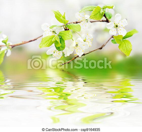 fleurs ressort, vagues, branche, eau - csp9164935