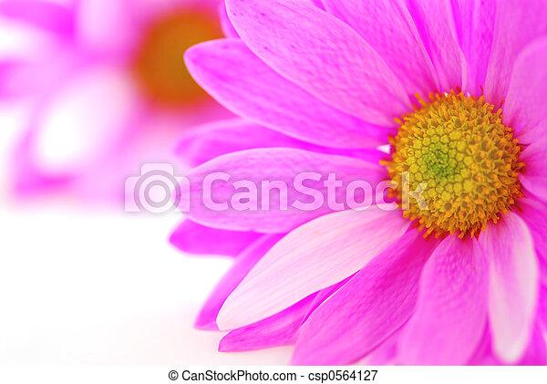 fleurs roses - csp0564127