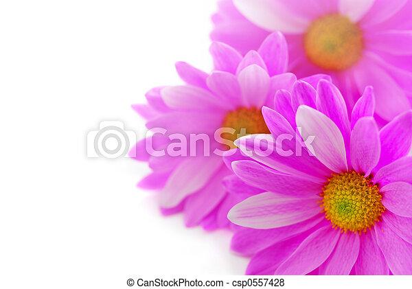 fleurs roses - csp0557428
