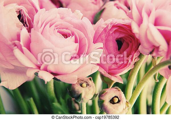 fleurs roses - csp19785392