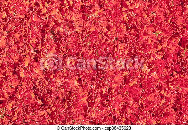 fleurs, rouges - csp38435623