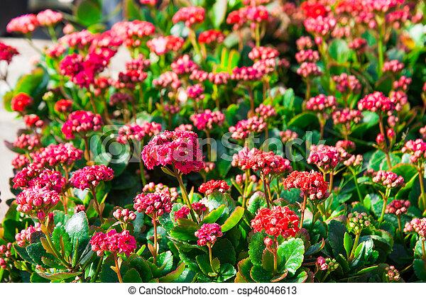 fleurs, serre, jardin, variété