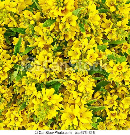 Fleurs, texture, jaune. Fleurs, inflorescences, campestral, texture, jaune. | CanStock