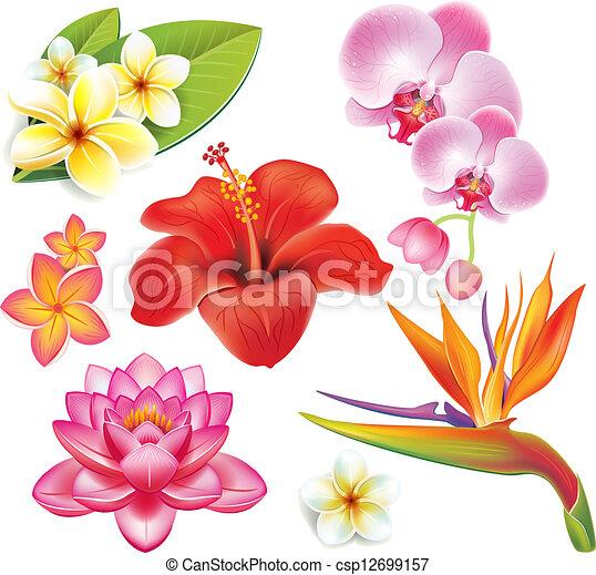 Fleurs Tropicales, Ensemble Vecteur