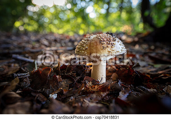 fliegen, brauner, steht, agaric, blätter, umgeben, wald - csp70418831