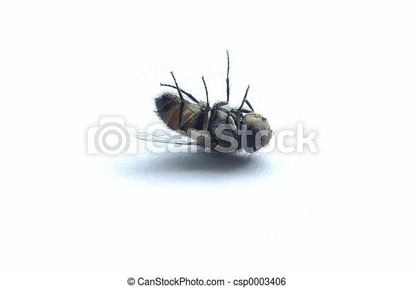 fliegen, tot - csp0003406