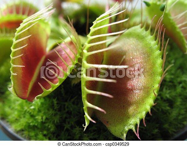 Fliegen venus falle fliegen pflanze falle venus for Kleine fliegen pflanze