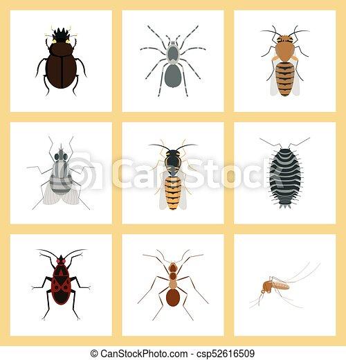 fliegen wohnung araneus montage ameise wespe biene skarab us soldat insekt moskito. Black Bedroom Furniture Sets. Home Design Ideas
