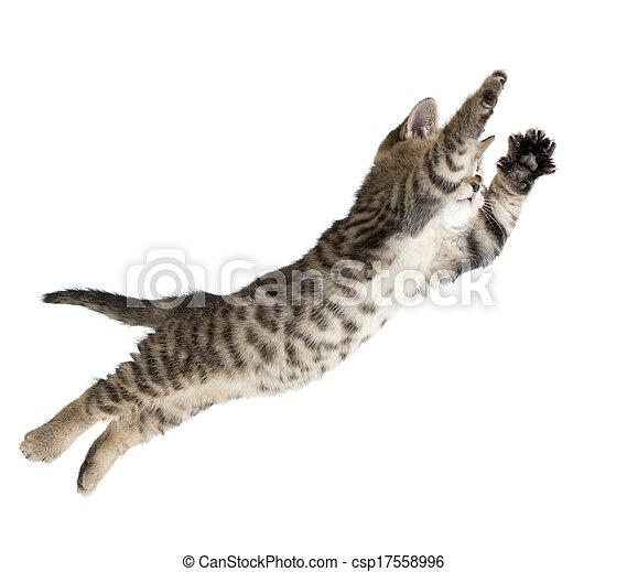 fliegendes, freigestellt, katz, springende , kã¤tzchen, weißes, oder - csp17558996