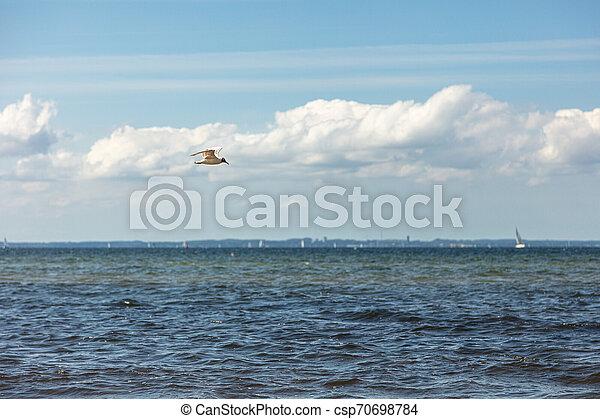 fliegt, möwe, sandstrand, aus, meer - csp70698784