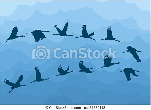 Flight birds with clouds. - csp57579118