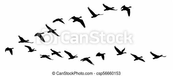 Flight of birds. - csp56660153
