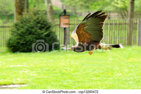 Flight of Eagle - csp13260472