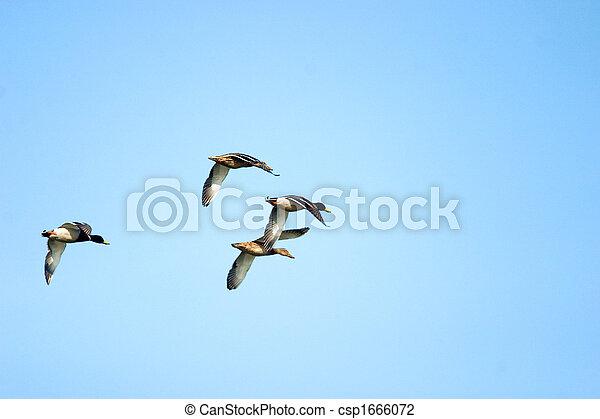 flighting wild birds - csp1666072