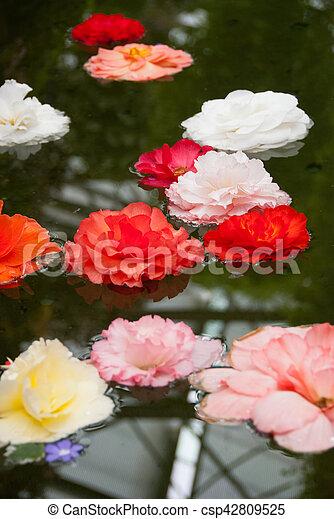 Floating petals - csp42809525