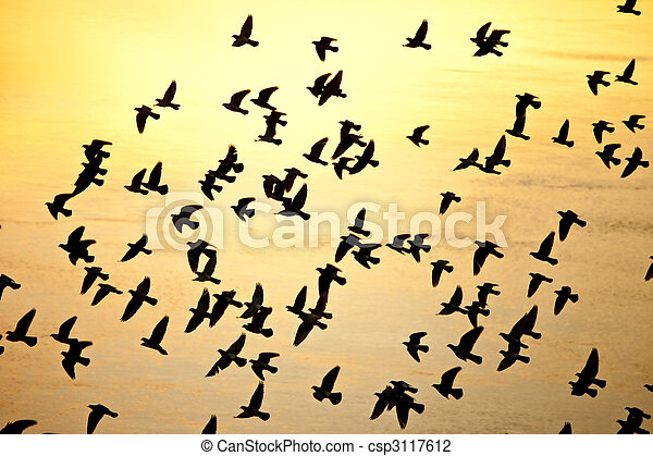 flock of birds silhouette - csp3117612