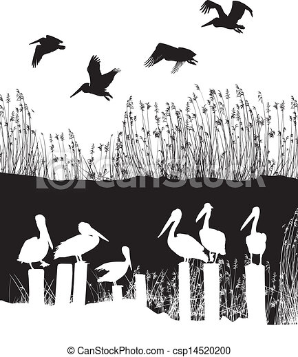 Flock of pelicans - csp14520200