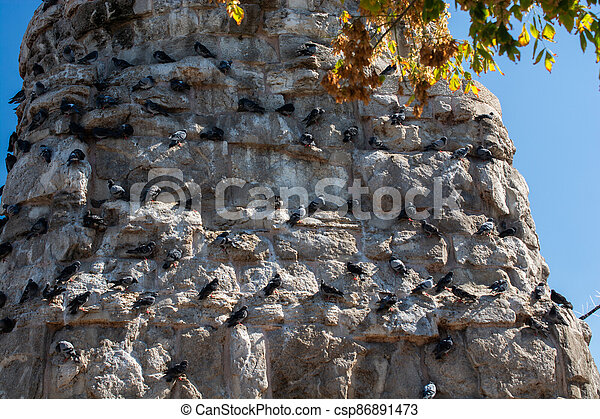 Flock  of pigeons sitting on the rocks of a wall in the street - csp86891473