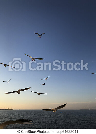 flock of seagulls flying in the sky over sea - csp64622041