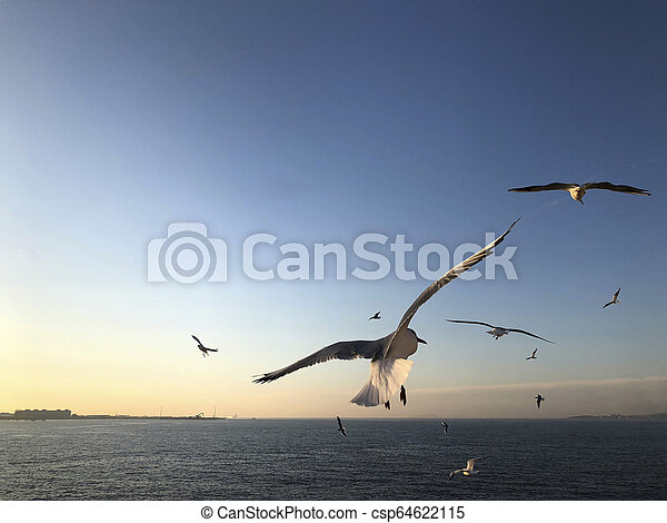 flock of seagulls flying in the sky - csp64622115