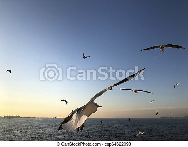 flock of seagulls flying in the sky - csp64622093