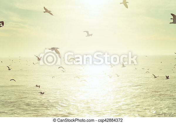 Flock of seagulls flying over the sea - csp42884372