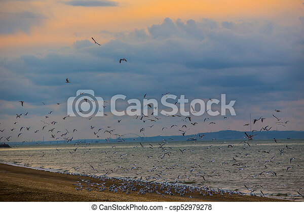 Flock of seagulls flying over the sea - csp52979278