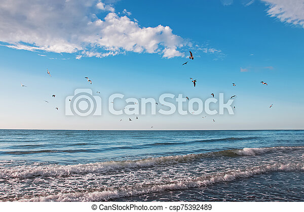 Flock of seagulls flying over the sea - csp75392489