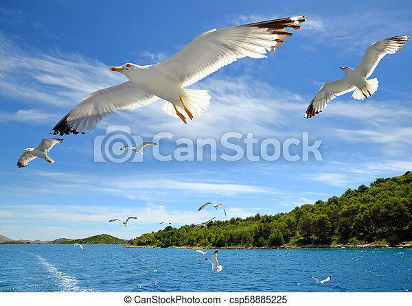 Flock of seagulls flying over the sea. - csp58885225