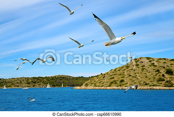 Flock of seagulls flying over the sea. - csp66610990