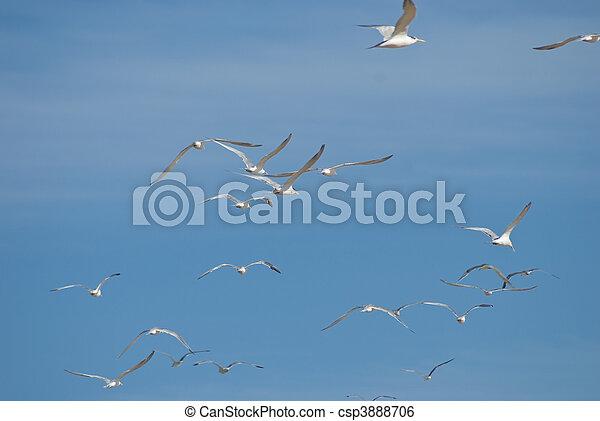 Flock of seagulls flying - csp3888706