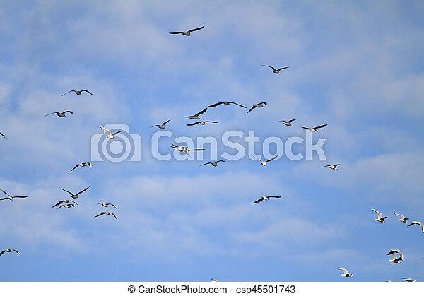 flock of seagulls - csp45501743