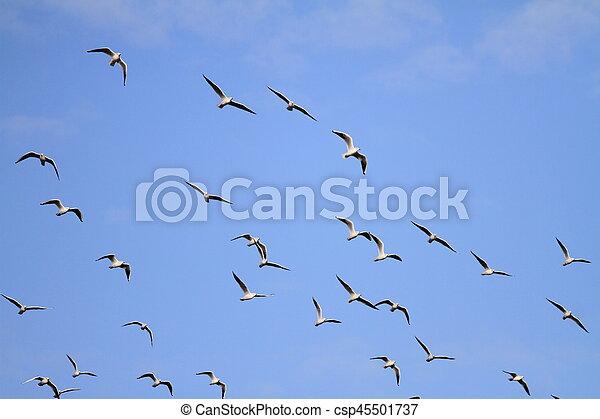 flock of seagulls - csp45501737