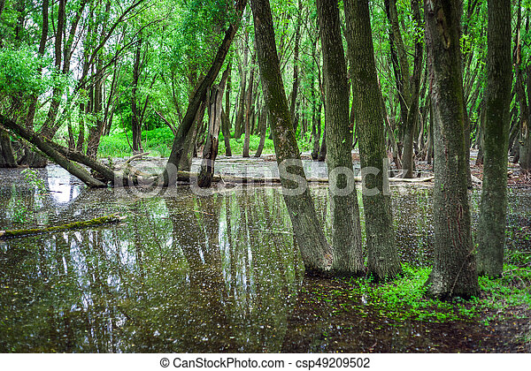 Flooded forests near river Danube,  Slovakia - csp49209502