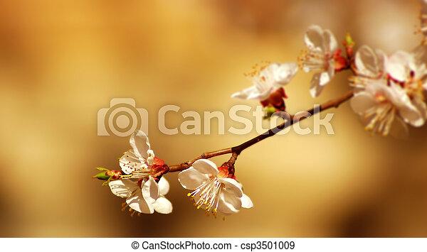flor, árvore - csp3501009