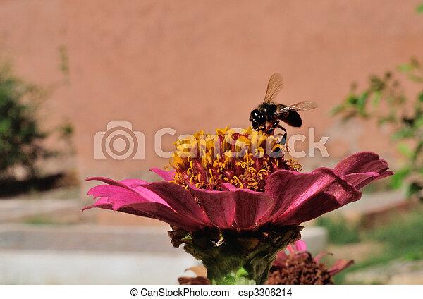 Abeja en flor - csp3306214