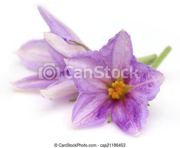 Flor de berenjena - csp21186453